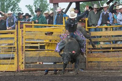 bulls-1238