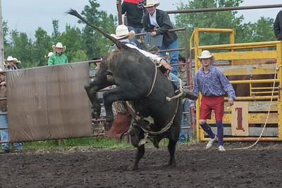 bulls-1250