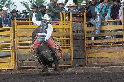 bulls-1248
