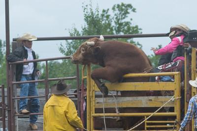 bulls-1227