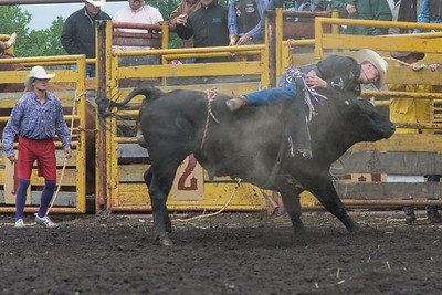 bulls-1243