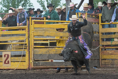 bulls-1239