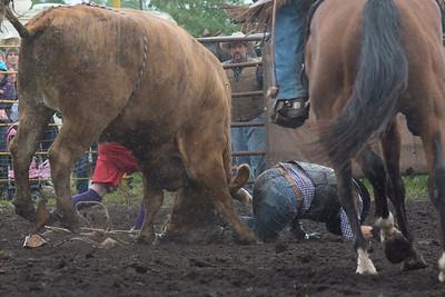 bulls-1211