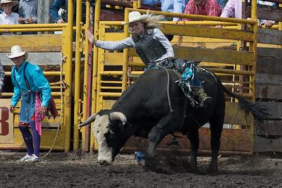 bulls-1888