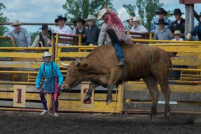 bulls-1899