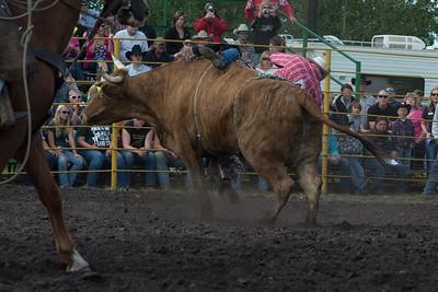 bulls-1906
