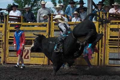 bulls-1890