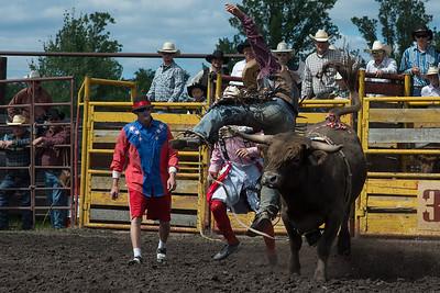 bulls-1886