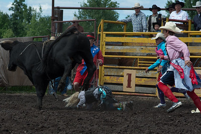 bulls-1893
