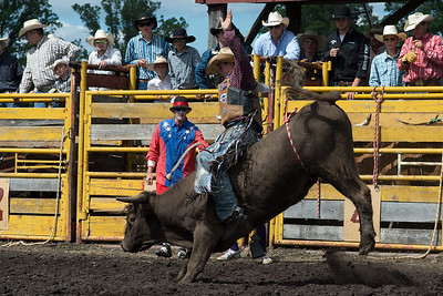 bulls-1881