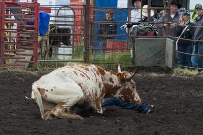 steers-1019