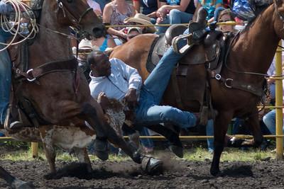 steers-1765