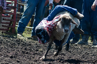 mutton_busting_saturday_14-4508