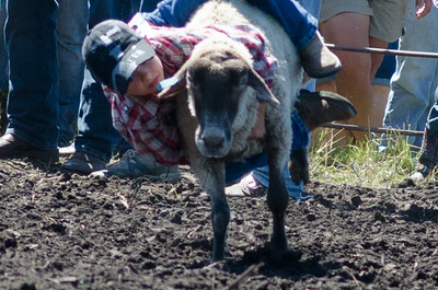 mutton_busting_saturday_14-4503
