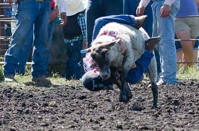 mutton_busting_saturday_14-4506