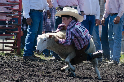 mutton_busting_saturday_14-4421