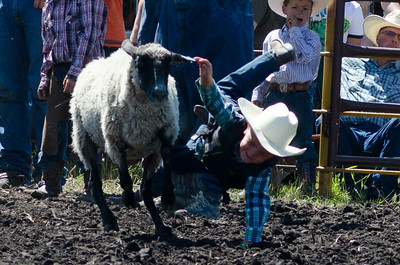 mutton_busting_saturday_14-4455