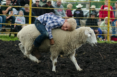 mutton_busting_sunday_14-5450