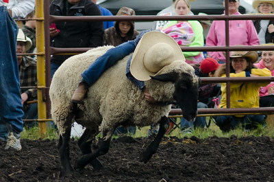 mutton_busting_sunday_14-5472