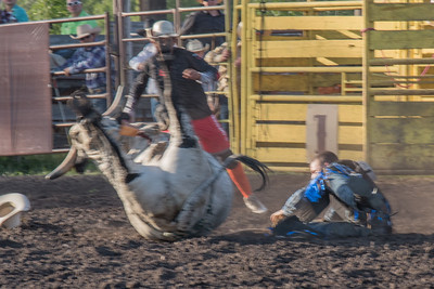 2016 rodeo friday bulls-3318