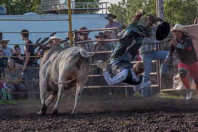 2016 rodeo friday bulls-3301