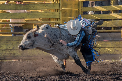 2016 rodeo friday bulls-3312