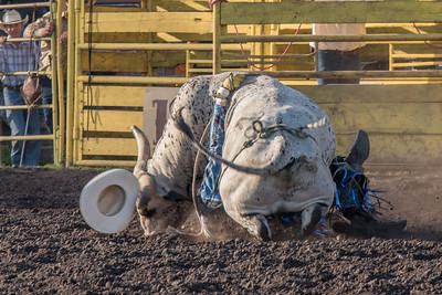 2016 rodeo friday bulls-3316