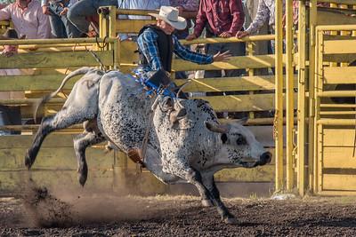 2016 rodeo friday bulls-3308