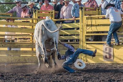 2016 rodeo friday bulls-3264
