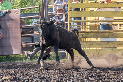 2016 rodeo friday bulls-3250