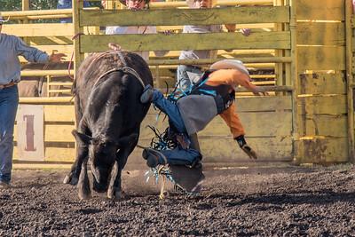 2016 rodeo friday bulls-3246