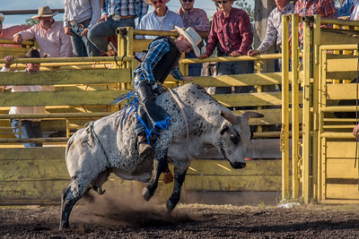 2016 rodeo friday bulls-3307