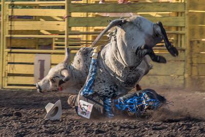 2016 rodeo friday bulls-3315
