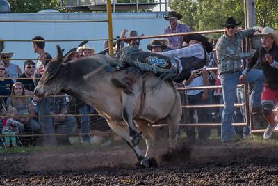 2016 rodeo friday bulls-3300