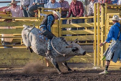 2016 rodeo friday bulls-3305