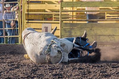 2016 rodeo friday bulls-3317