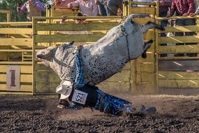 2016 rodeo friday bulls-3314