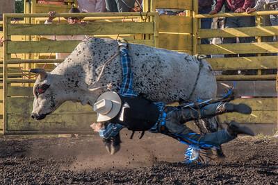 2016 rodeo friday bulls-3313