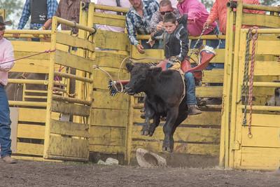 2016 rodeo saturday bulls-4199