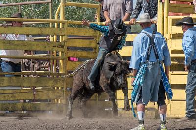 2016 rodeo sunday bulls-5297
