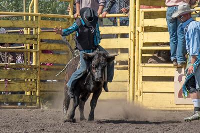2016 rodeo sunday bulls-5299