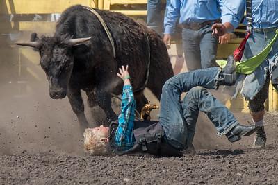 2016 rodeo sunday bulls-5306