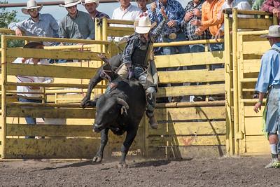 2016 rodeo sunday bulls-5347