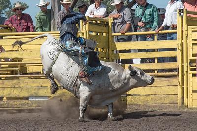 2016 rodeo sunday bulls-5317