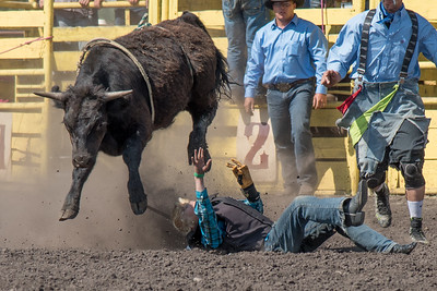 2016 rodeo sunday bulls-5307