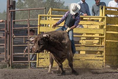2016 rodeo sunday bulls-5312