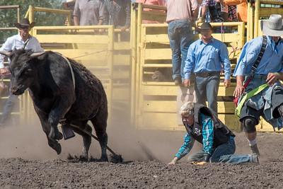 2016 rodeo sunday bulls-5309