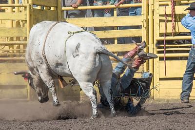 2016 rodeo sunday bulls-5321