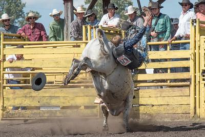2016 rodeo sunday bulls-5319