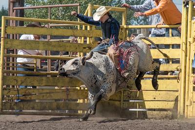 2016 rodeo sunday bulls-5325